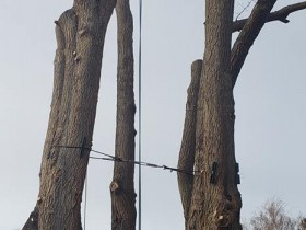 Safety-Tree-Removal-Large-Tree