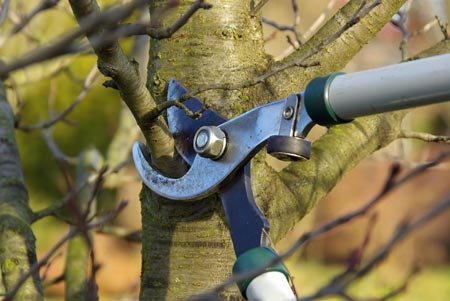 Tree Pruning Trimming Grand Junction, Colorado
