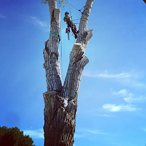 Tree Safety Climbing